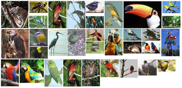 birds animals